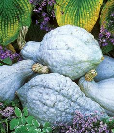 """""""Top Winter Squash Varieties for the Self-Sufficient Garden"""" A truly self-sufficient garden includes plenty of storage crops, including a few types of winter squash. Discover some new winter squash varieties based on reader and expert recommendations, plus learn how to combat common squash pests. From MOTHER EARTH NEWS magazine"""