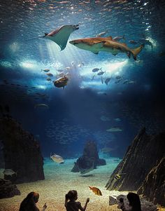 ... podemos ir ao fundo do mar e voltar no Oceanário. // ... you can go to the bottom of the ocean at the Oceanarium.