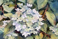 White Hydrangea von Ann Mortimer