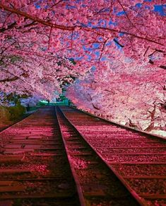 There are many beautiful places to visit in Japan all year round. The difficulty is choosing which place you want to go to the most. Place in japan, secret places in japan Beautiful Nature Wallpaper, Beautiful Landscapes, Asia Travel, Japan Travel, Beautiful World, Beautiful Places, Cherry Blossom Wallpaper, Cherry Blossom Japan, Osaka Japan