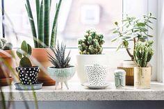 lovely plant pots