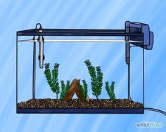 Set up a Freshwater Aquarium Step 7 Version 2.jpg