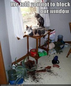 We told you not to block our window.