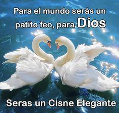 Frases para reflexión: Para el mundo serás un patito feo, para Dios serás un cisne elegante. El mundo es cualquier planeta, considerando que puede albergar