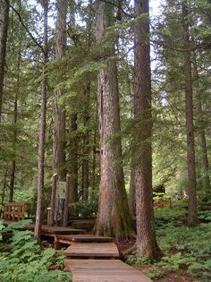 Giant Cedars Boardwalk Trail, Revelstoke: en route to kelowna Revelstoke Bc, Plan Canada, Glacier Np, Tickets Online, Western Canada, Laundry Hacks, Vancouver Island, British Columbia, Idaho
