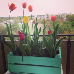 Tulip, stroage, balcon, flower