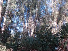 Nat Plants, Places, Plant, Planets