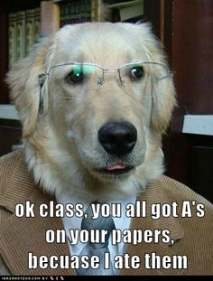 Professor Dog is everyone's favorite professor.  Great one for teacher to hand out on April Fool's Day!