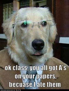 Good job, Professor Dog! lol