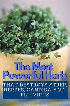 The Most Powerful Herb that Destroys Strep, Herpes, Candida and Flu Virus
