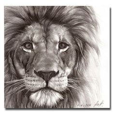 Stunning Lion drawing                                                                                                                                                      More