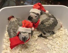 Your Bird & Holiday Stress - How to Reduce it