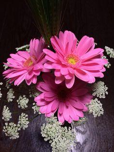 Gerbera Pink Spring