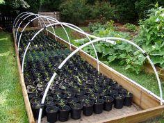 Backyard Nursery Vivienne Ndlovu Plant Business Ideas