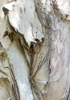 Beige | Ecru | Cream | ベージュ | бежевый | Bēju | Colour | Texture | Tree bark...