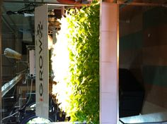 Some basil growing here with our 400 watt induction light. #hydroponics #growlights