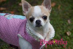 Moda Canina Internacional. Pipa Only International Designs.