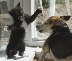 How You can Teach Your Dog to Stop Chasing the Cat. Lots of great training ideas!