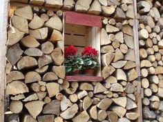 Ciclamini da #legnaia / #woodshed cyclamen / Thiene, Vicenza, Italy