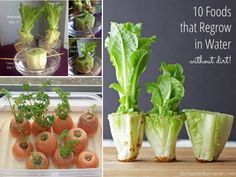 Learn how to regrow food kitchen scraps quickly and easily. This will save you money and you'll have an endless supply. Watch the video now.