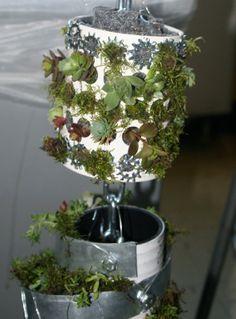 Rain chain with succulents