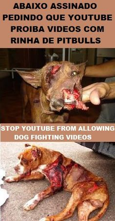 STOP THE DOG FIGHTING INSTEAD OF...... Petition. Stop You Tube from allowing dog fighting videos. posted 2/3/2013. PETITION - http://www.causes.com/causes/334307-stop-youtube-from-allowing-dog-fighting-videos - clique em JOIN