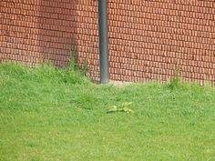W Zaha Hadid, Trunks, Plants, Drift Wood, Tree Trunks, Plant, Planets