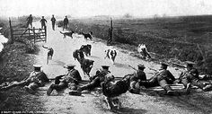 The animals that played a vital role during World War One | Daily Mail Online. Messenger dogs pictured running the gauntlet of rifle fire during their training during the First World War.