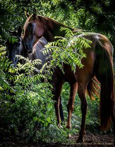 "The Secret Garden-3610 ""horse portraits"", ""horse spirit"", ""spirit horse"", ""stallions of Casa de Campo"", #Eqous, #horseportraits #horsespirit #spirithorse #StallionsofCasadeCampo #equos #JDecastro~AgainstThewindImages #AgainsttheWindImages, #horses www.againstthewindimages.zenfolio.com"