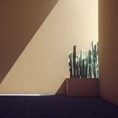 orange-cactus