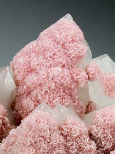 Rhodochrosite rosettes on Quartz - Romania ☙CRYSTALS❧ ☙minerals❧ ☙semi. Minerals And Gemstones, Rocks And Minerals, Crystal Magic, Rock Collection, Beautiful Rocks, Mineral Stone, Rocks And Gems, Stones And Crystals, Gem Stones