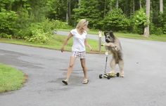 This shaggy pup really punching it on a scooter. | 13 GIFs Of Animals Who Have Discovered The Turbo Button