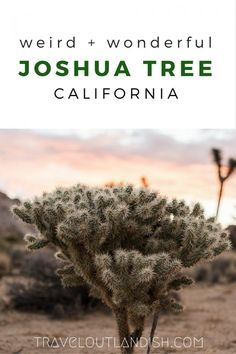 California has some of the most epic national parks in the USA, and Joshua Tree National Park is no exception. Check out 9 weird + wonderful things to do in Joshua Tree! California National Parks, Visit California, National Parks Usa, Joshua Tree National Park, California Travel, Stuff To Do, Things To Do, Road Trip Usa, Usa Roadtrip