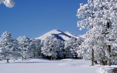 ruidoso, nm...why can't our winters look like this? wish i could go snowboarding up there again!