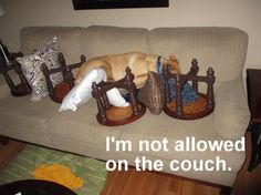 I'm not allowed on the couch.