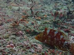 11海底散策