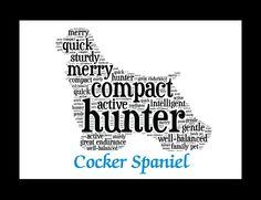 Cocker Spaniel …