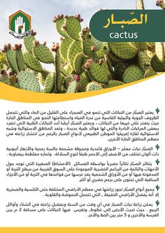 Flowering House Plants, Cactus Plants, Study Apps, Food Wallpaper, Veg Garden, Still Life Art, Cactus Flower, Health Facts, Irrigation