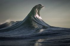 Eagle by Ray Collins