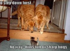 I love dogs too – but not as much as cats! And I do think they might have this kind of thought process…