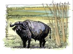 James Richards Sketchbook: Kenya: A Transformational Experience