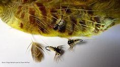 Gris Zebra Midge nymphe fly Blanc Avec Aile sz 22 Go à motif