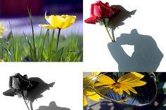 Four original Art photographs of flowers by StegoPhotoStore, €7.00
