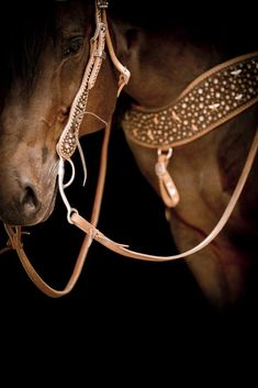 Beautiful Horse and I love the Tack!