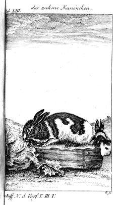 Naturgeschichte der vierfüßigen Thiere. (1775)