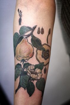 fuckyeahtattoos:  Quince diagram by Alice Carrier in Portland, Oregon.