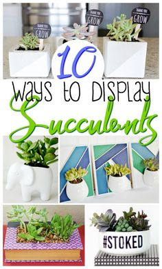 how to display succulents