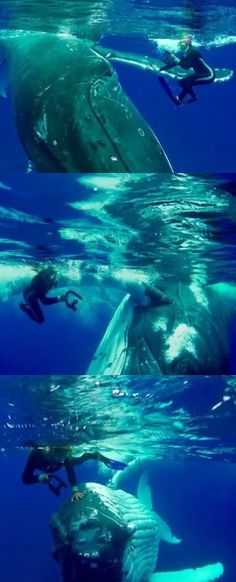 Amazing Moment Hero Whale Saves Snorkeler From Shark By Hiding Her Under Giant Fin While Pushing Her To Safety (VIDEO) #amazing #moment #whale #ocean
