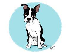 Lili Chin - Boomer   -   Boston Terrier