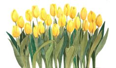 Yellow Tulips 10x15 Original Watercolor by by wandazuchowskischick